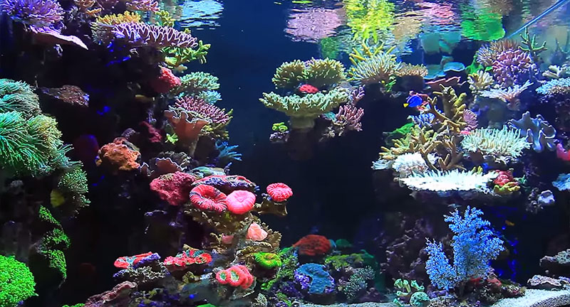 "Video still from Youngil Moon's video ""Reef Tank Aquarium"""