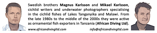Swedish brothers Magnus Karlsson and Mikael Karlsson, cichlid writers and underwater photographers specializing in the cichlid fishes of Lake Tanganyika and Malawi. From the late 1980s to the middle of the 2000s they were active as ornamental fish exporters in Tanzania (African Diving Ltd.)