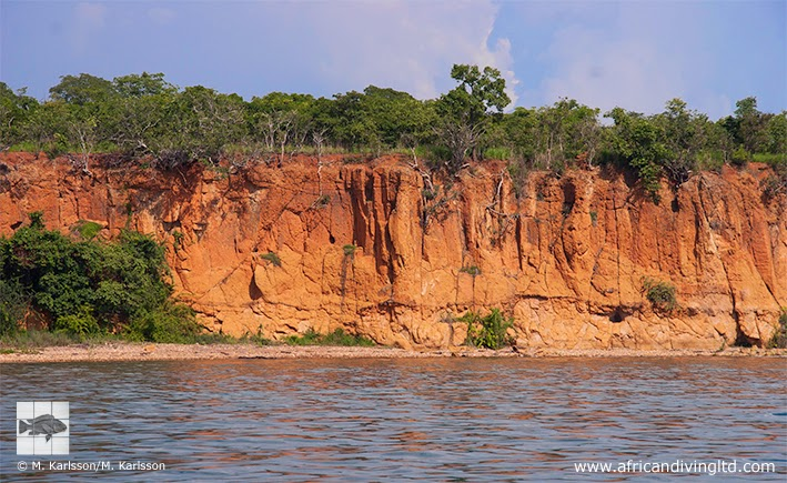 Fig. 5. The steep coastline between Bulombora and Moyobozi villages exhibits a beautiful reddish colour.