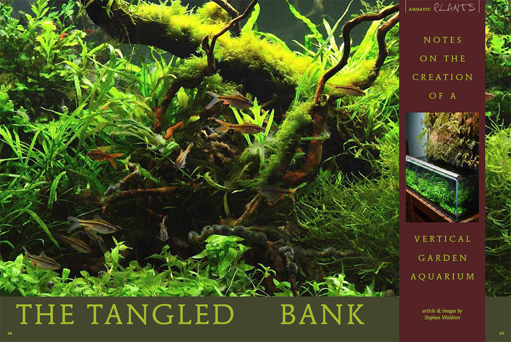 """The Tangled Bank""; a  rough cut of the opening spread - by Steve Waldron"