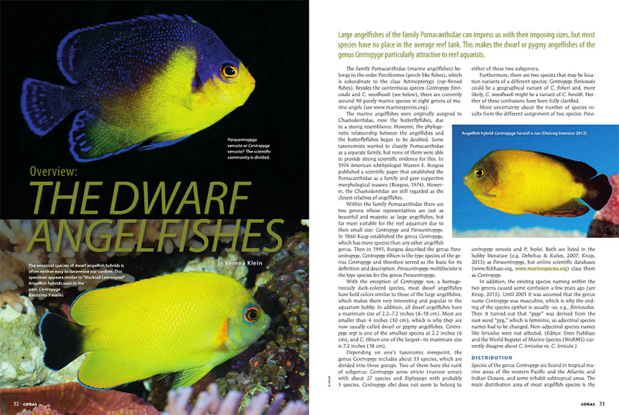 "The opening spread of Verena Klein's article, ""Overview: The Dwarf Angelfishes"", appearing in the March/April 2015 issue of CORAL Magazine."