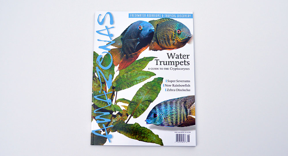 The cover for the May/June 2015 issue of AMAZONAS Magazine, featuring Water Trumpets (A Guide to the Cryptocorynes), Super Severums, New Rainbowfish and Zebra Otocoinclus