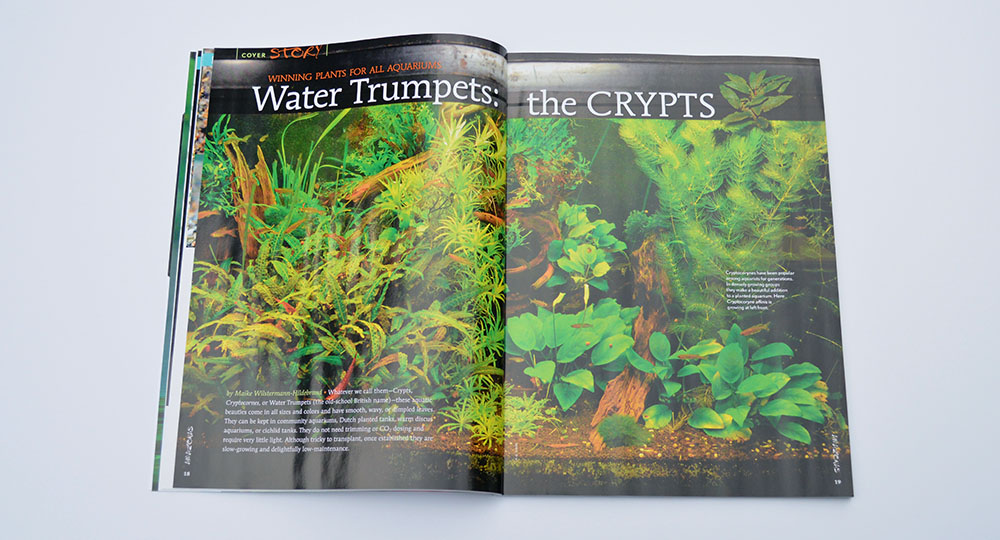 "Maike Wilstermann-Hildebrand introduces ""Water Trumpets: the Crypts"", which are winning plants for all aquariums."