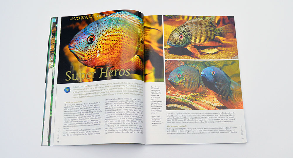 "Peter Ditttrich introduces us to the natural diversity of wild Severums (and an aquarium strain) in his article ""Super Heros"""