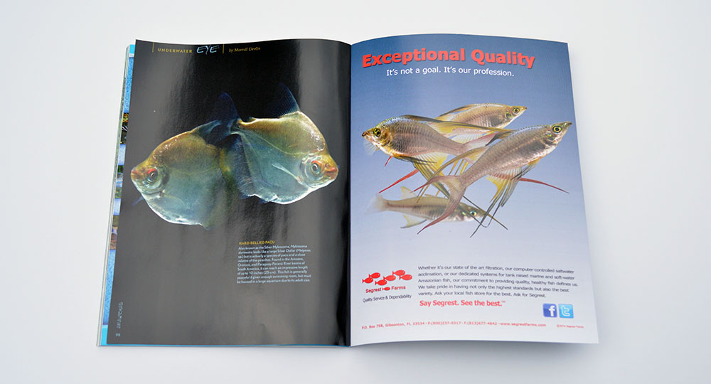 """As with every issue, Morrell """"Mo"""" Devlin presents a pictorial wrap up in our Underwater Eye. What are these Pacus? You'll have to read to find out."""