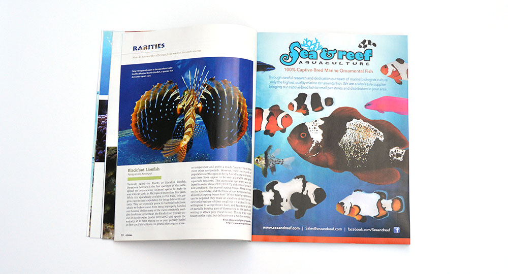 A&M Aquatics kicks off this issue's Rarities section with a look at the Blackfoot Lionfish, Parapterois heterura.