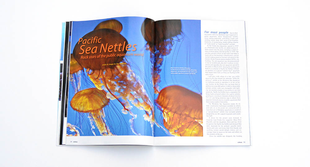 "Jay Hemdal discusses the ""Rock stars of the public aquarium world"" in his article about the Pacific Sea Nettle exhibit at the Toledo Zoo."