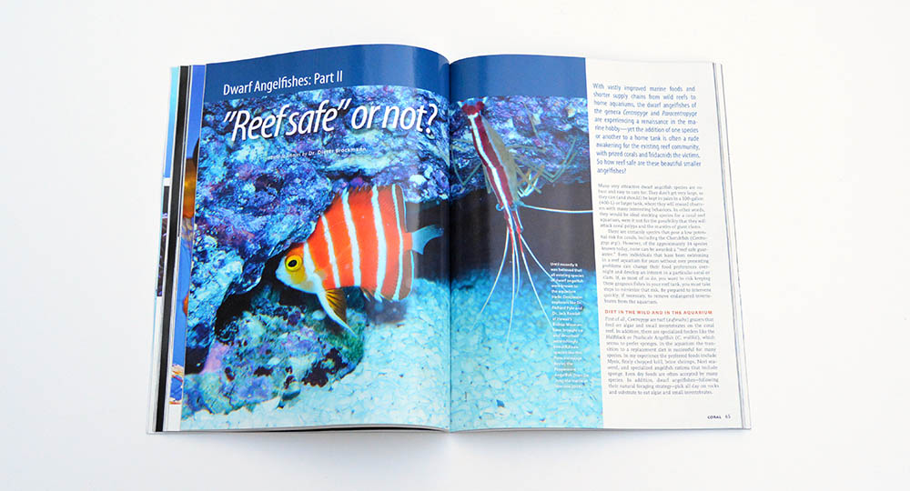 "We promised more Dwarf Angelfish content continuing from our prior issue; Dr. Dieter Brockmann examines the question, ""'Reef Safe', or not?"""