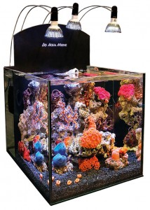 AquaMedic's Yasha desktop system is a typical smaller plug-and-play kit with high-tech LED lighting and filtration in a compartment hidden behind the back wall. Click to enlarge.