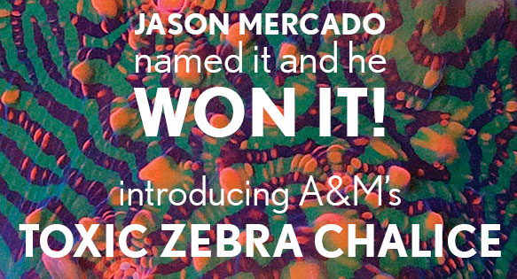 #namethechalice - Jason Mercado named it and he won it! Introducing A&M's Toxic Zebra Chalice!