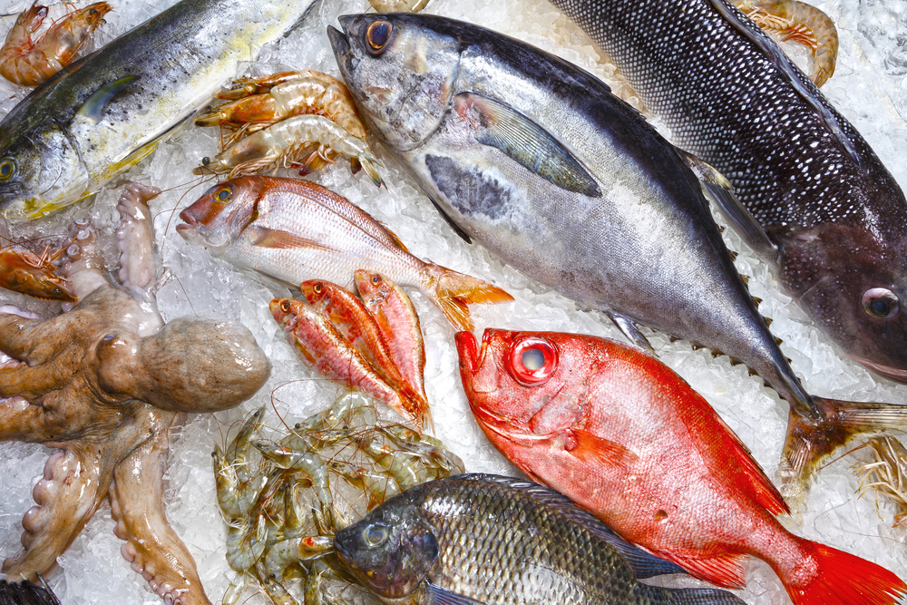 Seafood is one of the base ingredients in complete frozen fish food blends. Allegations of extremely high mercury levels raised questions. Certified testing has now addressed these concerns. Image Credit: Shutterstock