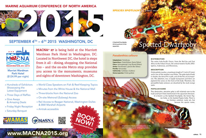 "The opening spread of the ""Spotted Dwarfgoby"", the species spotlight in the May/June 2015 issue of CORAL Magazine"