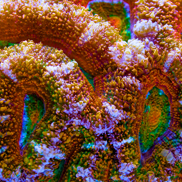 """Than Thein takes a look at post-production image manipulation that brings out the true look of your corals without going """"over the top""""."""
