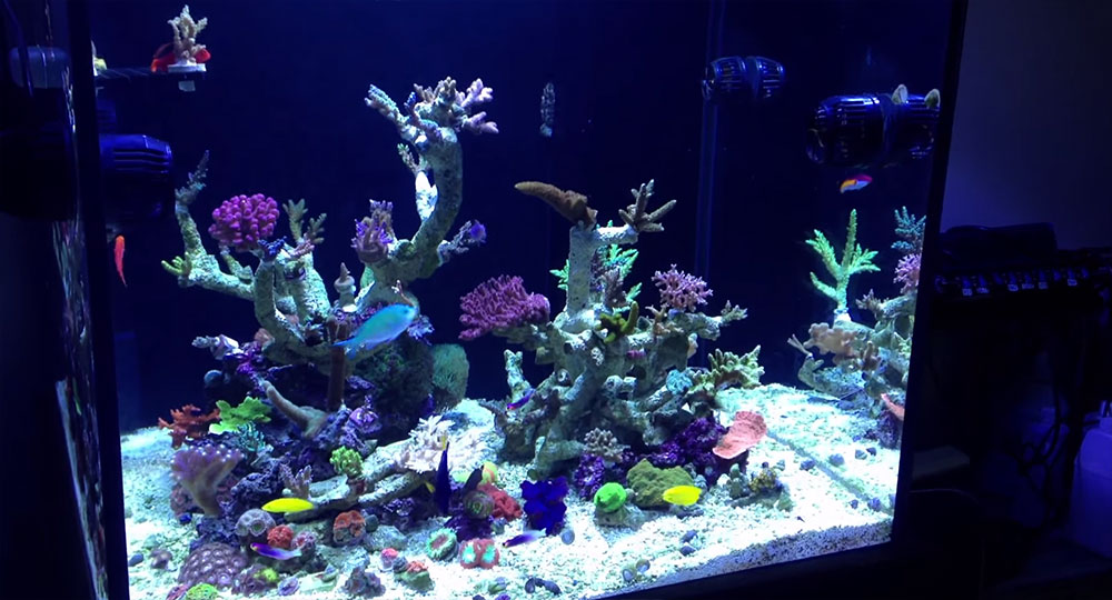 Richard Colombo's 115 gallon reef aquarium, 3 months after setup, December 2013.