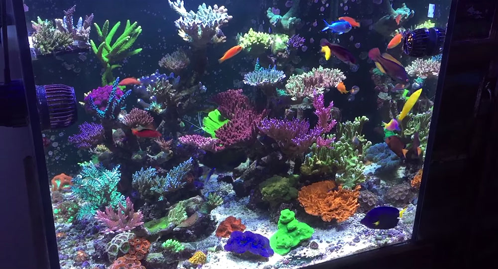 Richard Colombo's reef aquarium, just over a year later, January 2015.