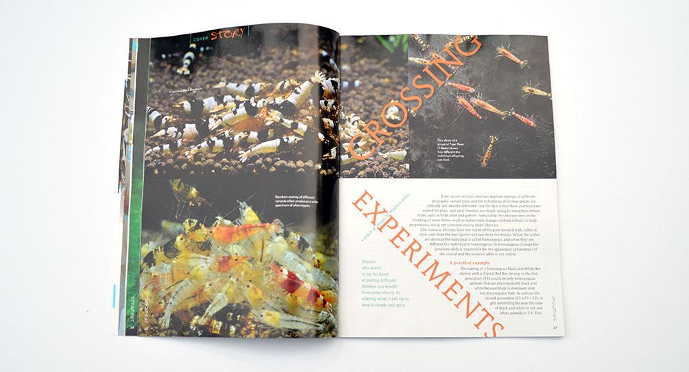 Friedrich Bitter examines Crossing Experiments, unlocking the genetic secrets of dwarf shrimps.