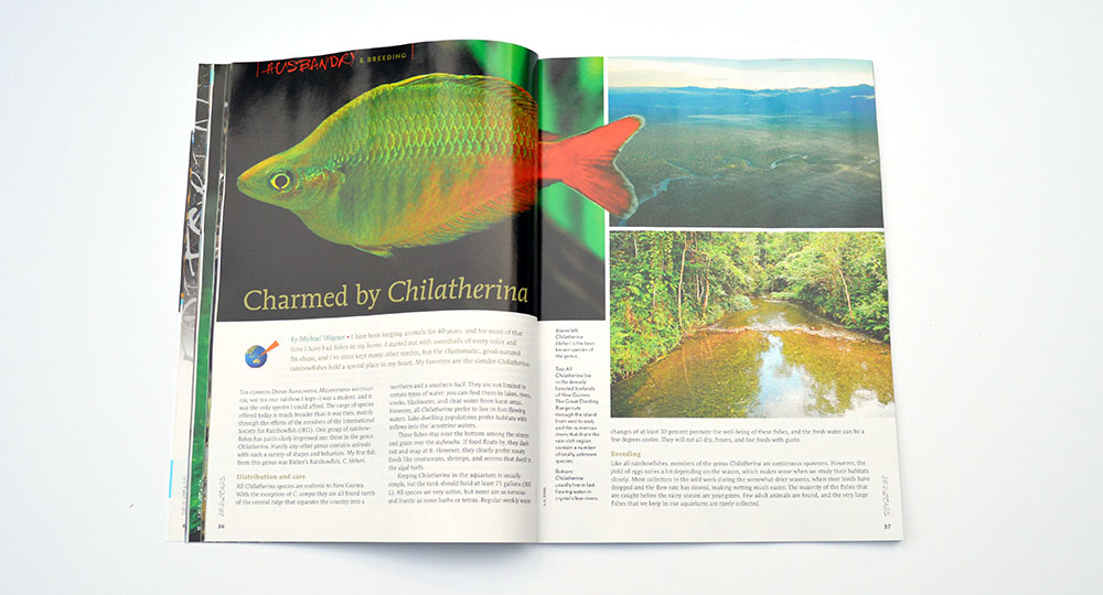 """Charmed by Chilantherina"", by Michael Wagner, introduces readers to an over overlooked genus of rainbowfishes."