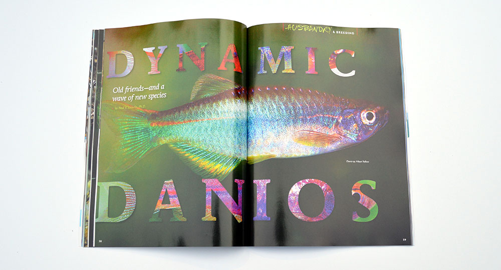 Paul V. Loiselle, Ph.D., showcases Dynamic Danios; Old friends—and a wave of new species!