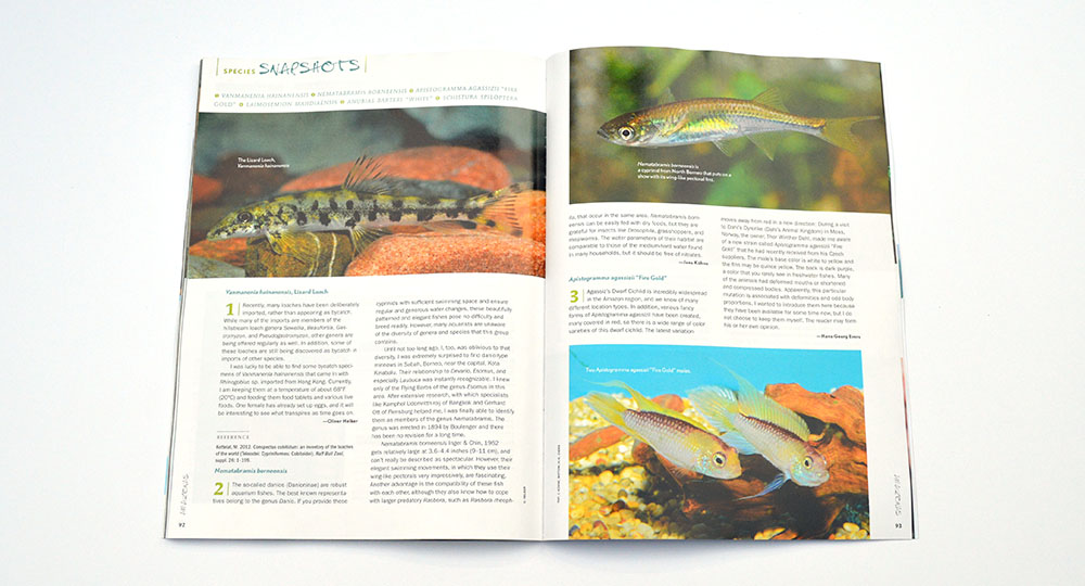 "Our Species Snapshots in this issue include Vanmanenia hainanensis, Nematabramis borneensis, Apistogramma agassizii ""Fire Gold"", Laimosemion mahdiaensis, Anubias barteri ""White"", and Schistura spiloptera. Learn more about them in the July/August 2015 edition of AMAZONAS Magazine."