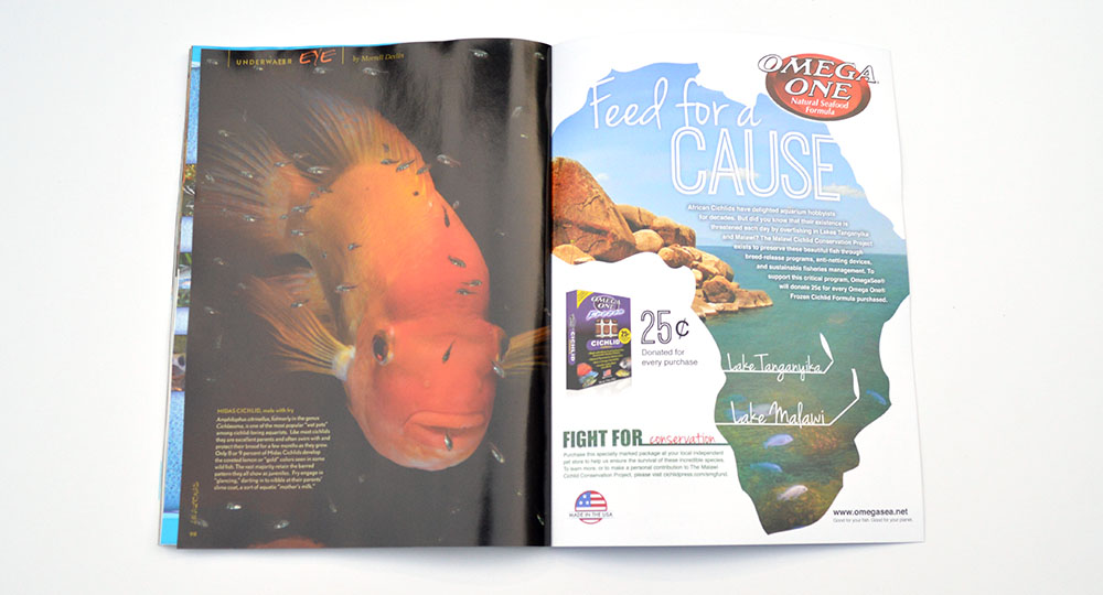 "As with every issue, Morrell ""Mo"" Devlin presents a pictorial wrap up in our Underwater Eye. Learn more about the Midas Cichlid in this installment."
