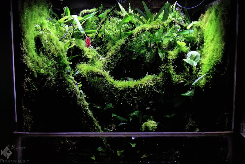 Green lush growth in Bappaditya's vivarium.