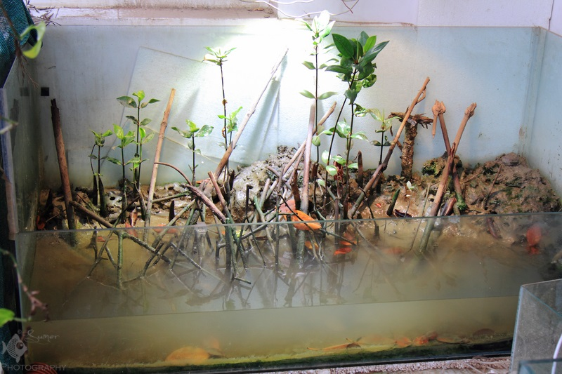 A Full Tank Shot of the biotope that Bappaditya has created.