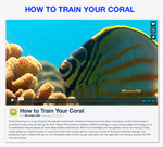 Train-your-coral-150-px