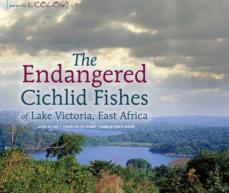 The Endangered Cichlid Fishes of Lake Victoria, East Africa - AMAZONAS Magazine, May/June 2012