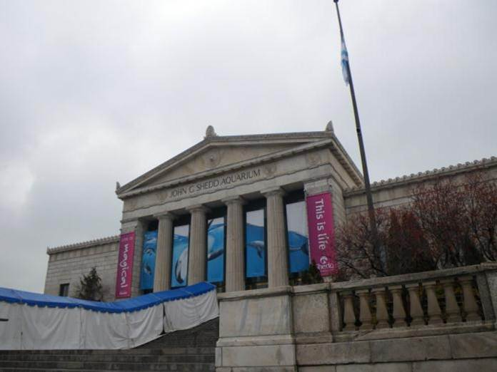 The iconic front entrance to the Shedd Aquarium