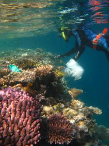 Dr. van Oppen collecting coral fragments from an Australian reef.