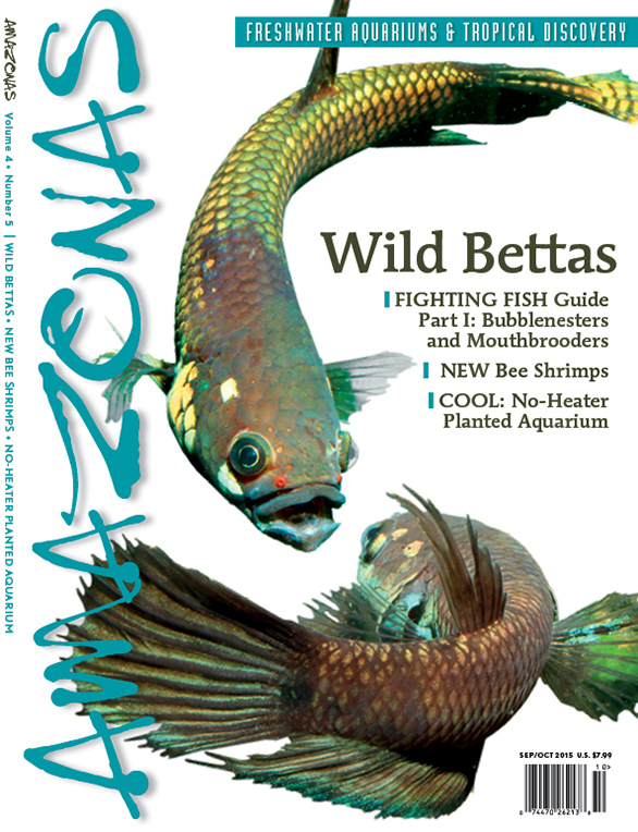 AMAZONAS draft preview cover for September/October 2015 shows sparring male wild bettas. Image by Henning Zellmer.