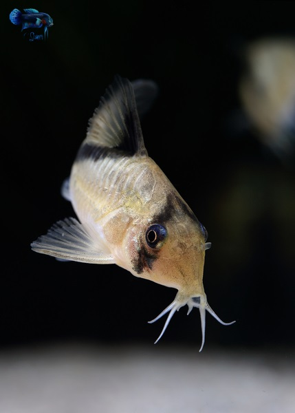 Every so often I get to keep a fish which makes photography so much fun again. I am so glad I got these fish.