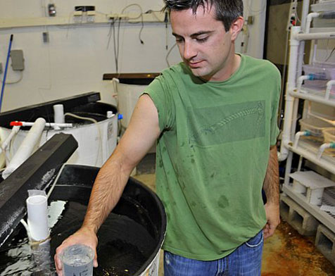 Matthew Wittenrich in his Florida Institute of Technology marine breeding lab.