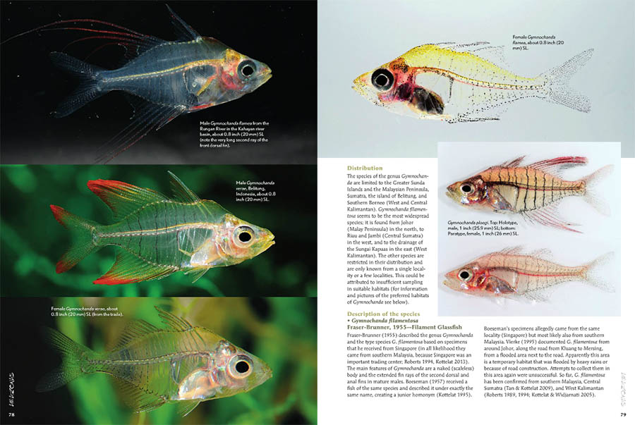 Several examples of Gymnochanda spp. on pages 78 & 79.