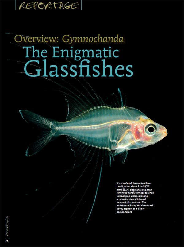 Overview: Gymnochanda The Enigmatic Glassfishes  - July/August 2015 Issue of AMAZONAS Magazine