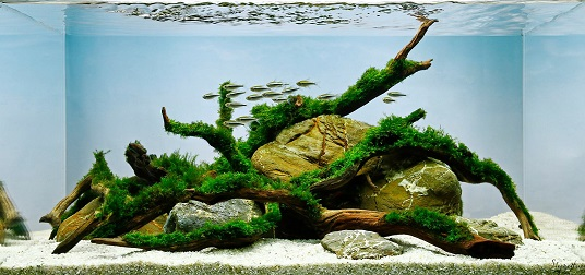 Learn How To Aquascape With George Farmeru0027s New Blog Series