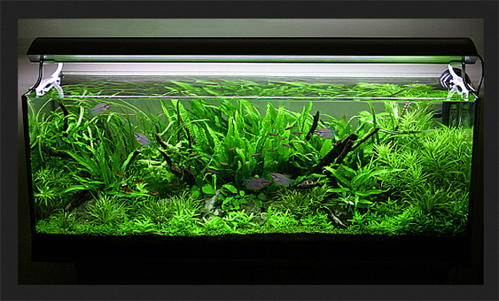 George's 63 gal. Nature Aquarium style aquascape