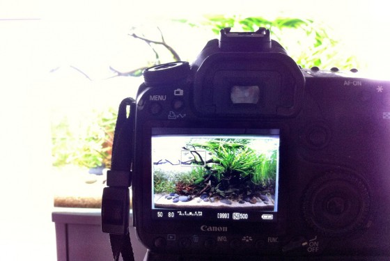 Using a tripod to ensure the aquascape is photographed exactly square and level is essential