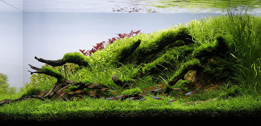 Aquascaping Contests: The All-Important Final Photo Shoot of