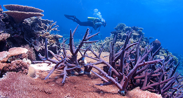 Reefs around the world are threatened by climate change. A new study shows that some corals have the genes to adapt to warmer oceans. Photo: Ray Berkelmans, AIMS