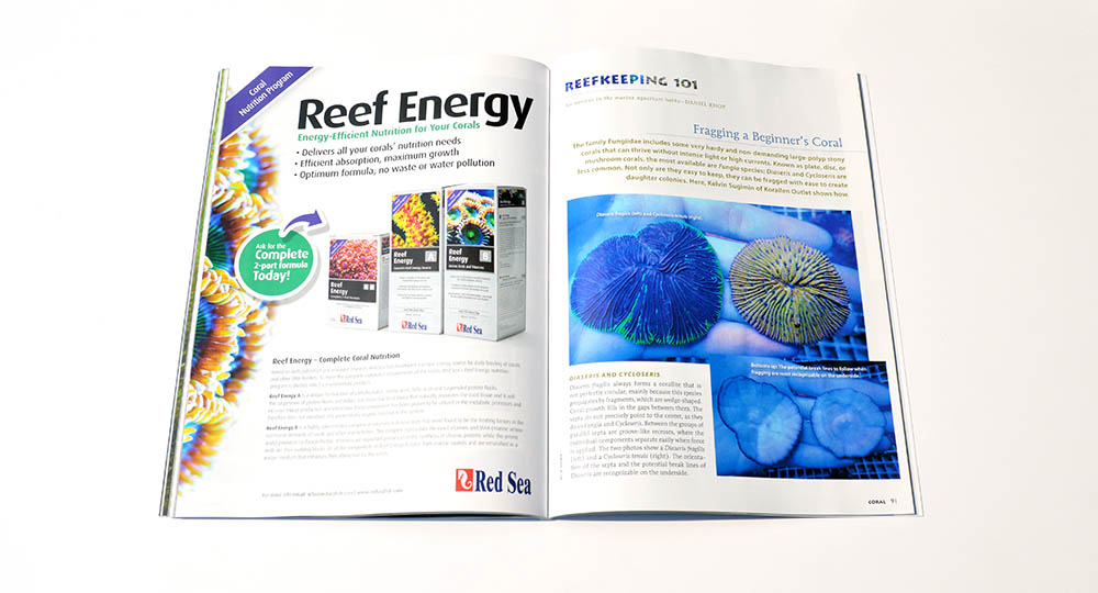 "Daniel Knop investigates ""Fragging a Beginner's Coral"", which focuses on the plate coral Diaseris fragilis as well as Cycloseris.  All in this issue's Reefkeeping 101 column."