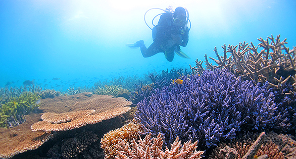 Diver surveying Great Barrier Reef. Image: Ray-Berkelmans/AIMS.
