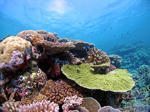 Far Northern Great Barrier Reef. Reefs around the world are threatened by climate change. A new study shows that some corals have the genes to adapt to warmer oceans. Credit: Line K Bay, AIMS