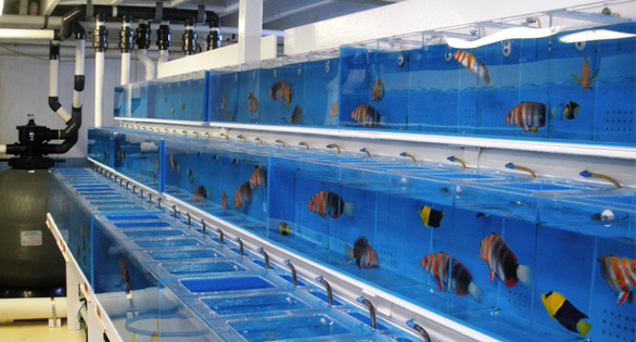 Wholesale Facility of Marine Aquarium Fish