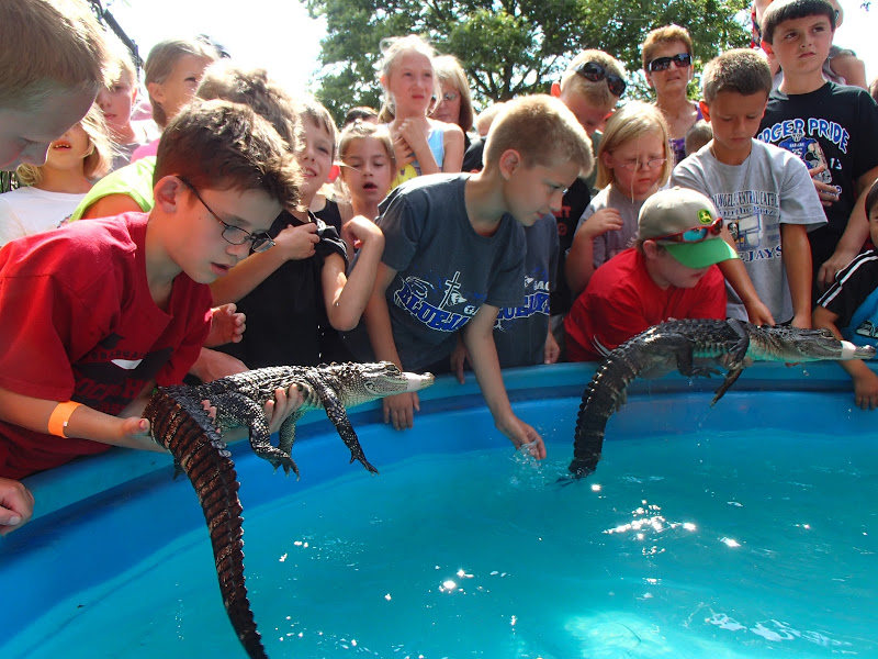 Attendees can get up close and personal with alligators at Gator Encounters new exhibit at the Aquatic Experience.