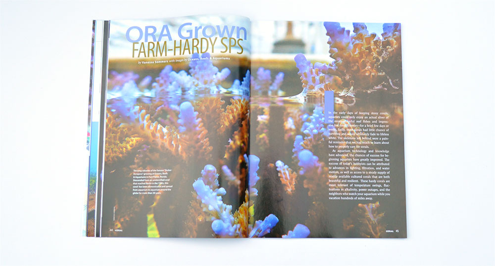 ORA Grown Farm-Hardy SPS, by Vanessa Sommers, looks at the hardiest farmed corals today, some of which haven't seen the ocean in 25 or 30 years!