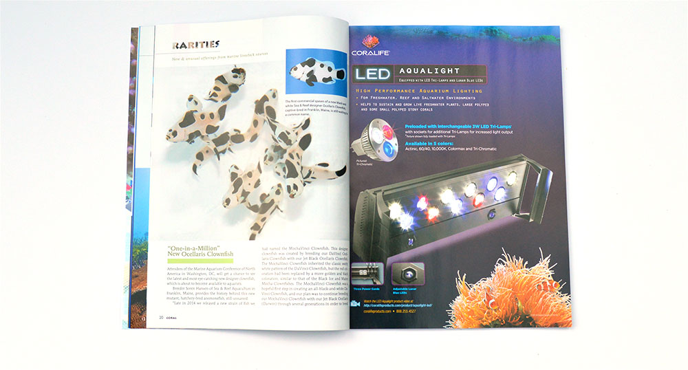 "Rarities is back, featuring 'One-in-a-Million"" Clownfish from Sea & Reef Aquaculture, and Maricultured Stony Corals from Quality Marine."
