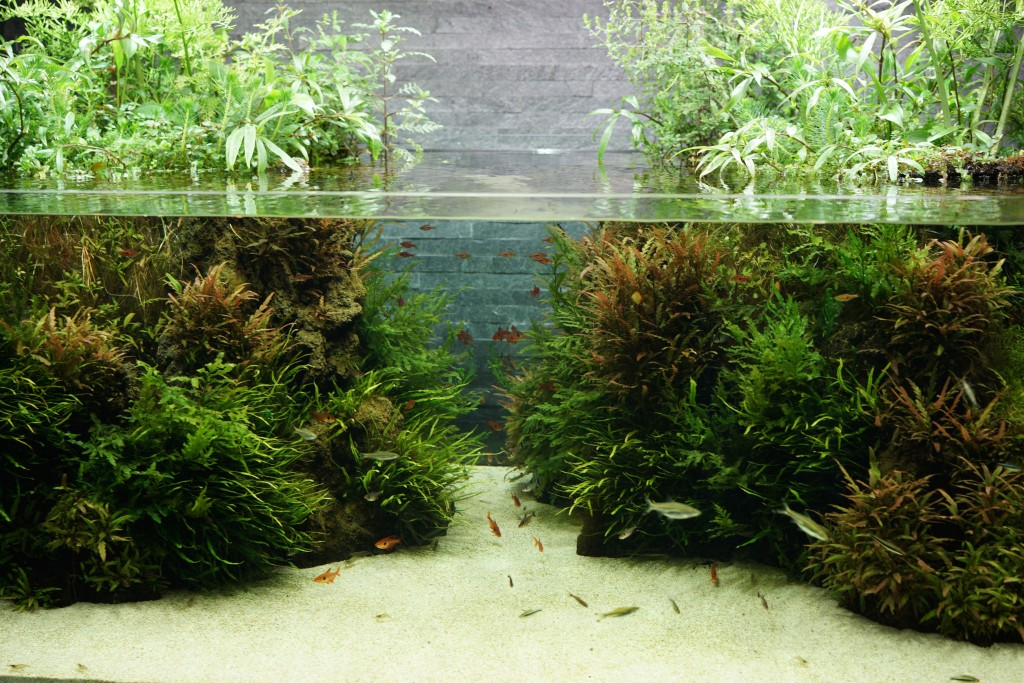 The second new aquascaped aquarium added to Sumida Aquarium in 2013. Image by Flickr photographer Zengame | CC BY 2.0
