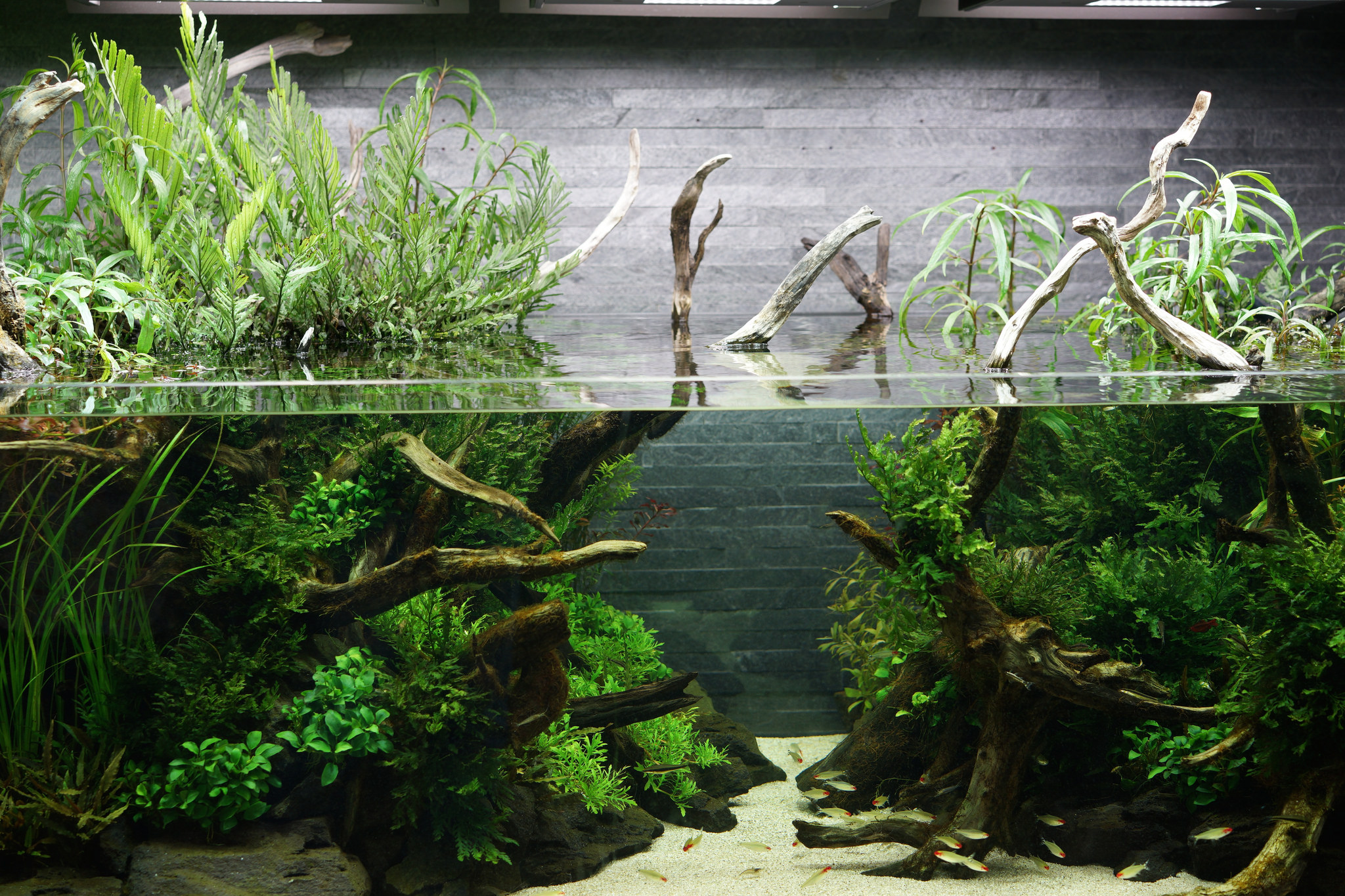 The Passing Of Aquascaping Legend Takashi Amano