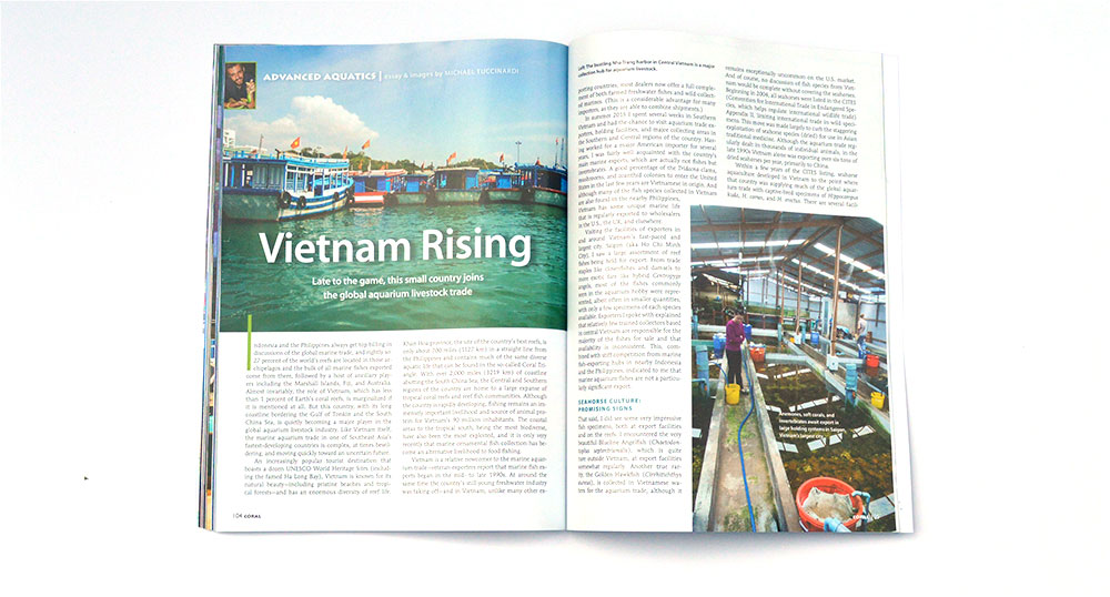 Field reporting and newest Sr. Editor Mike Tuccinardi  takes us to Vietnam, a relative 'late arrival' to the global marine aquarium livestock trade.
